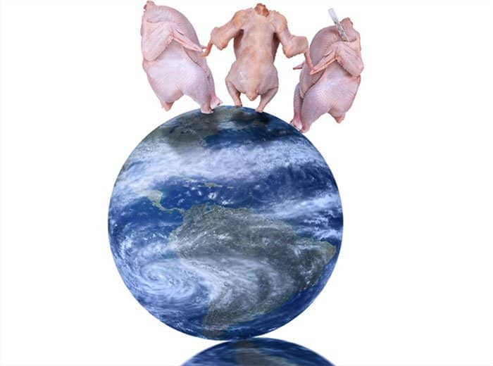 dressed-chicken-dancing-on-top-of-the-world-weird-stock-photos.jpg